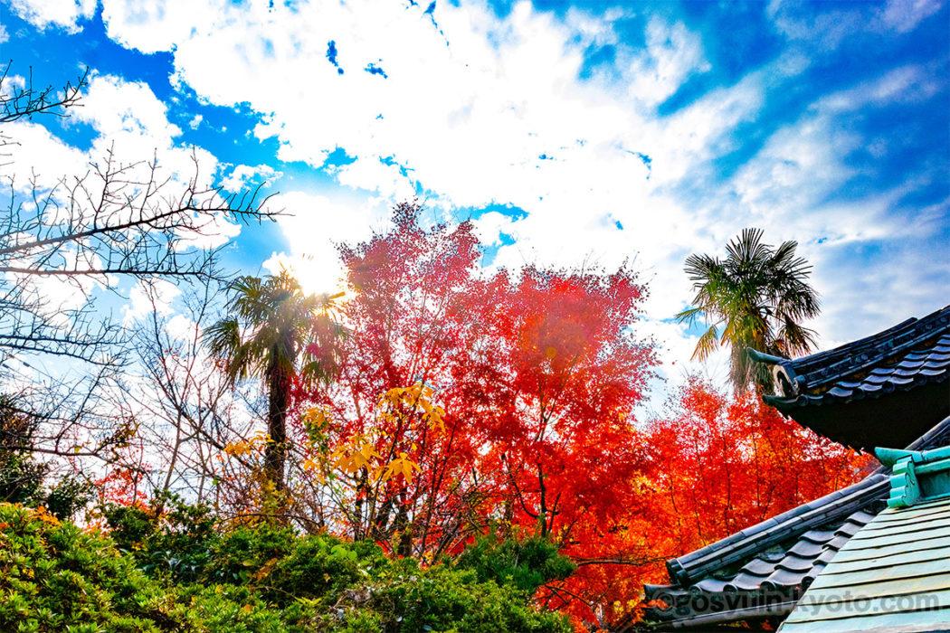 安祥院の紅葉