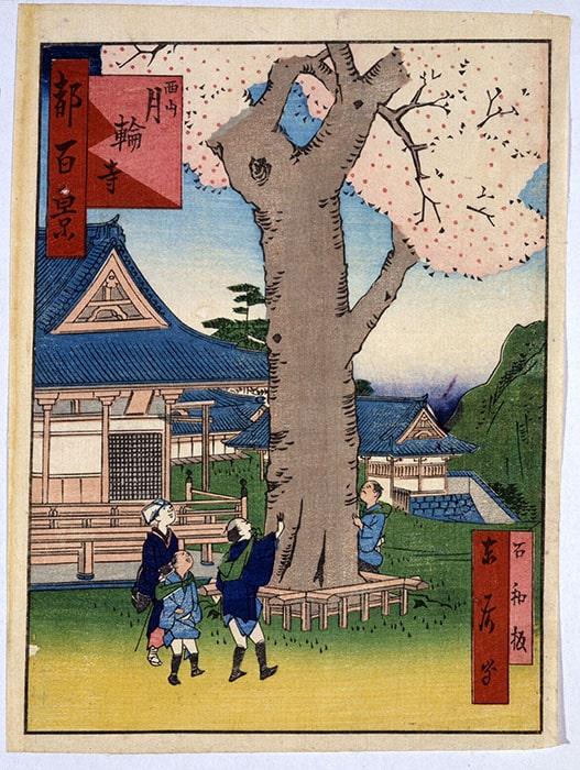 月輪寺の時雨桜