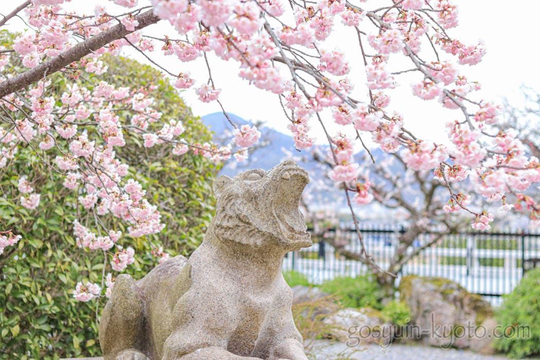 京都市嵐山の法輪寺の桜
