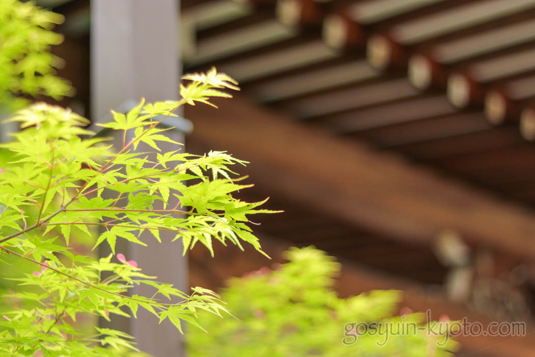 京都市左京区の大蓮寺