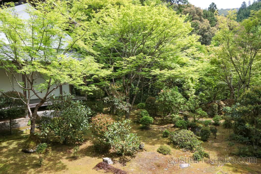 京都市右京区の西明寺の新緑