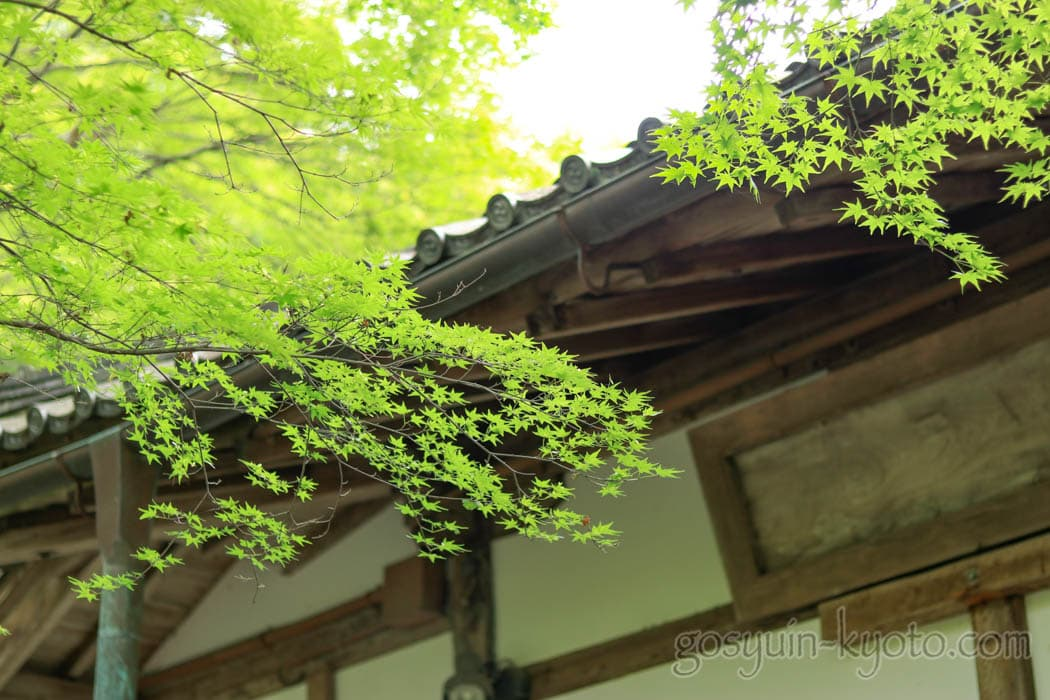 京都市右京区の化野念仏寺の新緑
