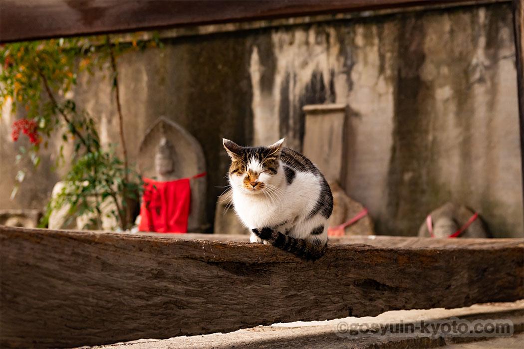 行願寺の猫