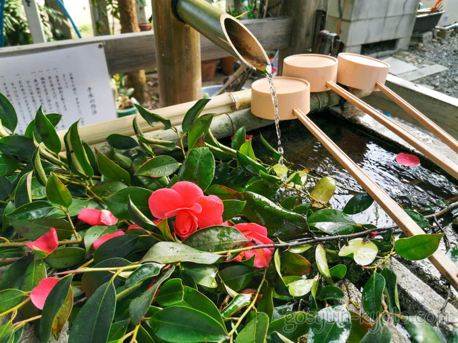 水火天満宮の椿の花