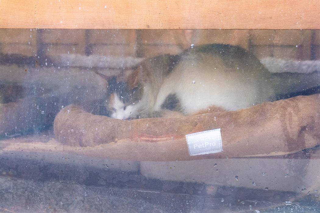伏見豊川稲荷本宮の猫