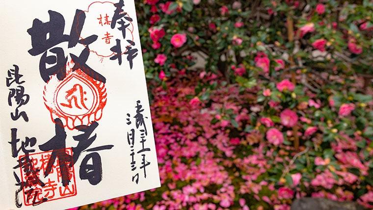 椿寺(地蔵院)の散椿の御朱印と散り椿